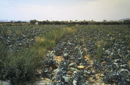 Plot in Lorca